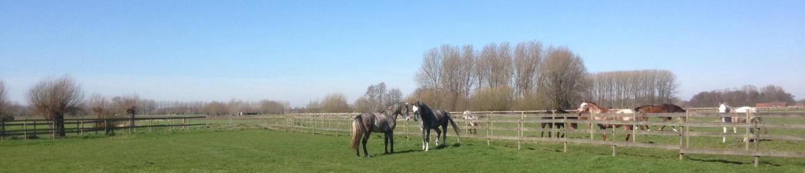 vzw Infinity s club paardrijden in Landegem